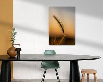 silhout van een koren tijdens het gouden uur in de zomer van Kim Willems