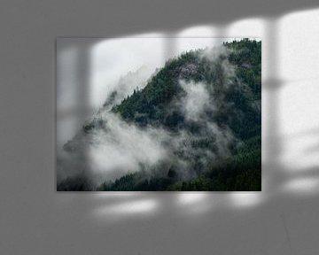 Dennebomen in de wolken gehuld in Noorwegen van Teun Janssen