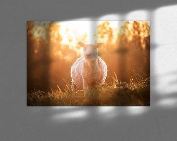 Schafe bei Sonnenuntergang von Sharon de Groot