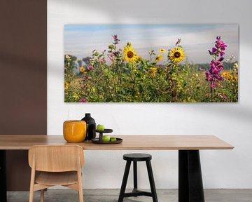 Bunte Blumenrabatte entlang eines niederländischen Feldes von Ruud Morijn