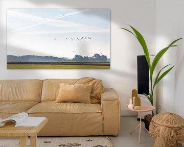 Gänse aus der Vogelperspektive in der Dämmerung über Land von Percy's fotografie