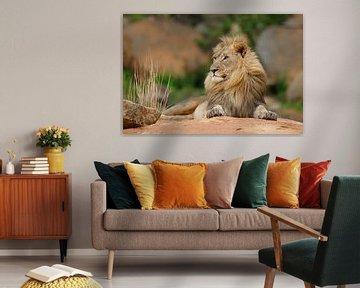 Königlicher Löwe auf einem Felsen von Henk Bogaard