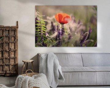 Mohnblumen im Garten von Kurt Krause