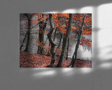 Herbstfarben III von Ilona Picha-Höberth