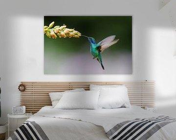 Le colibri vole grâce à la bromélia sur Henk Bogaard