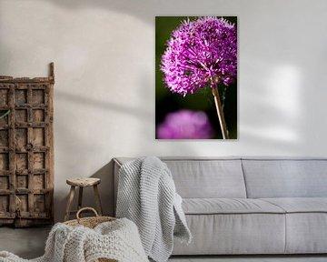 Violette Blume von Dennis Claessens