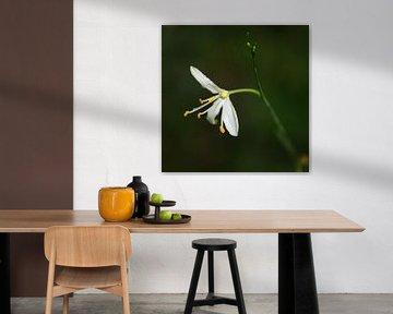 Macrofoto van een bloem von Dennis Claessens