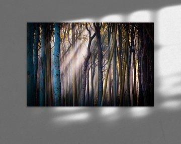 Licht im Wald von Martin Wasilewski