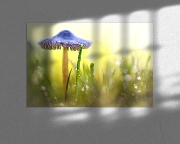 Sfeerimpressie: Magic Mushroom... van Bob Daalder