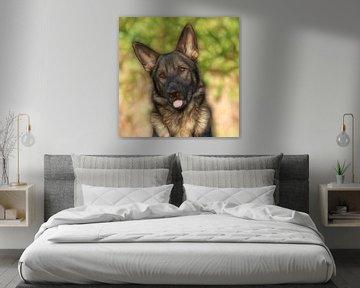 Porträt Deutscher Schäferhund - Glühen von Michar Peppenster