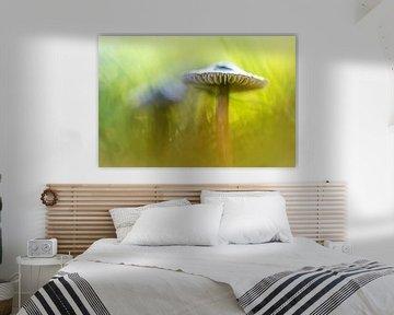 Mighty Marvelous Mushroom.... van Bob Daalder