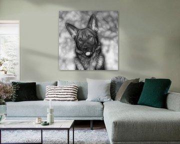 Schwarz-Weiß-Porträt Deutscher Schäferhund von Michar Peppenster