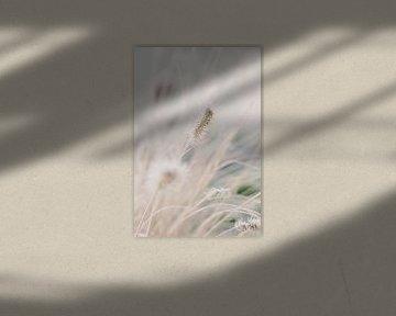 Lampenschirm Gras im Winter | Naturfotografie Wandkunst von Milou van Ham