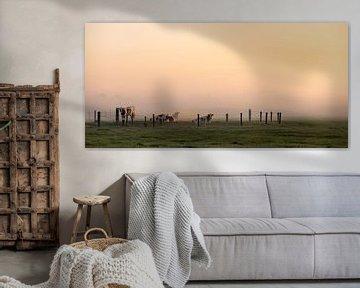 Panoramafoto koeien in het ochtendlicht van Percy's fotografie