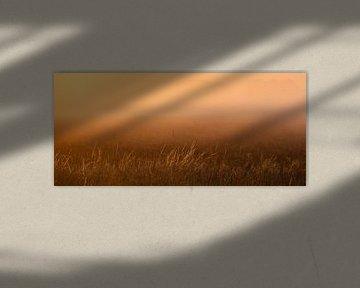 Panoramafoto helmgras in het ochtendlicht van Percy's fotografie