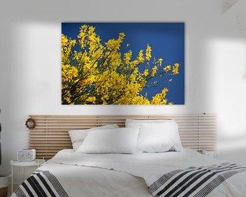 Gele struik in bloei van Dennis Claessens