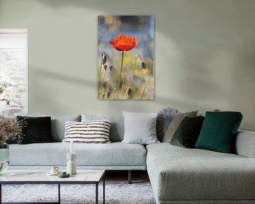 Papaverbloem met knoppen van Kurt Krause