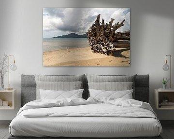 Boom op het strand, Ambon, Molukken, Indonesië van Zero Ten Studio