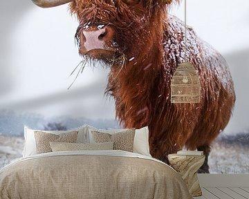 Schotse Hooglander in de sneeuw van Dirk-Jan Steehouwer