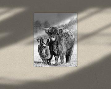 Haar in de wind; hooglanders moeder en kind van Joey Hohage