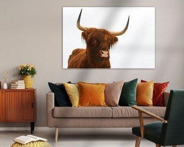 Portret van een Schotse hooglander van Sjoerd van der Wal