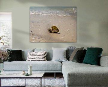 Schelp op Caribisch strand van Moniek van Rijbroek