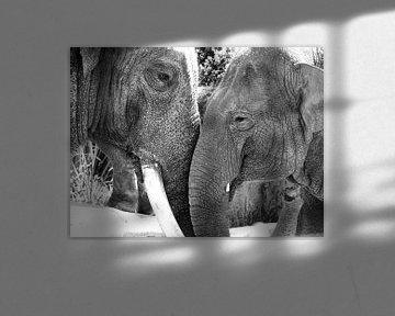 Elefanten in der Liebe schwarz und weiß von Liv Jongman