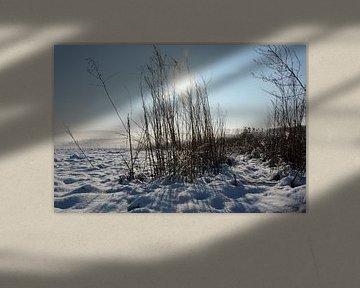Wintergras von Claudia Evans