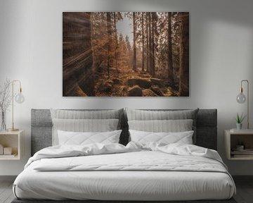 Zonnestralen in het bos van Marc-Sven Kirsch