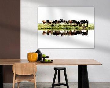 koeien op een rij