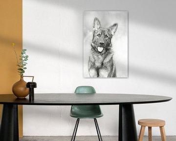 Alter deutscher Schäferhund - schwarz und weiß behandelt von Michar Peppenster