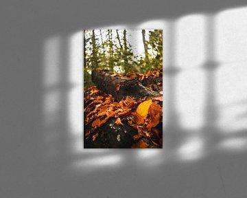 Herfstbladeren van Jan Willem De Vos