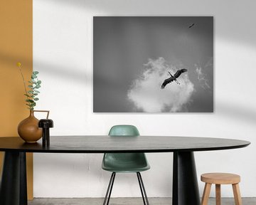Ooievaars in lucht - Dierfotografie - Wallonië - België van Tim Goossens