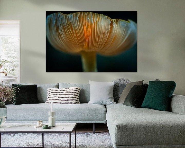 Sfeerimpressie: Doorschijnende paddenstoel met zonlicht van Fotografiecor .nl