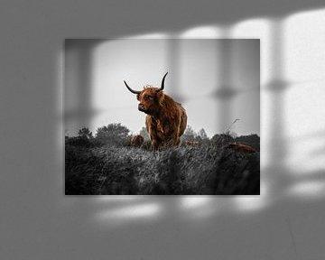 Scottish Highlander Schwarz Weiß Rot (Breit) von Joren van den Bos