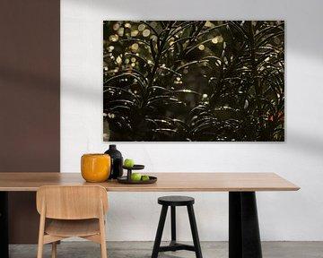 Detail einer Eibenpflanze mit Bokeh-Lichtkreisen von Kristof Lauwers
