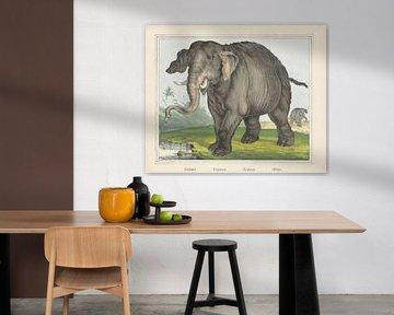 Elefant. / Elefant. / Eléphant. / Olifant von J. Scotti, 1829 - 1880