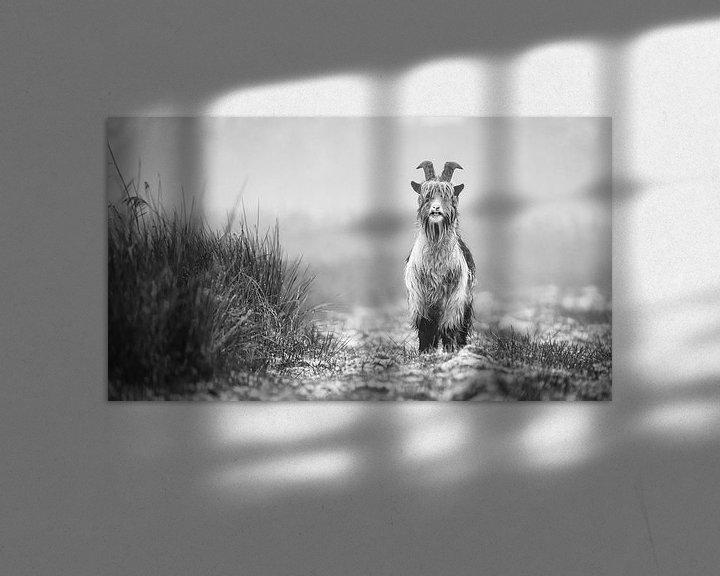 Sfeerimpressie: Landgeit in de Alde Feanen (zwart/wit) van Martijn van Dellen