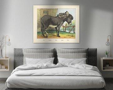 Âne. / Esel. / Esel. / Asino. / Esel, Firma Joseph Scholz, 1829 - 1880
