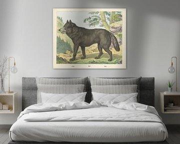 Wolf, Firma Joseph Scholz, 1829 - 1880