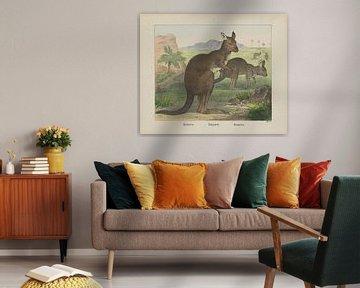 Kanguroo / Känguruh. / Kangouru, Firma von Joseph Scholz, 1829 - 1880_1