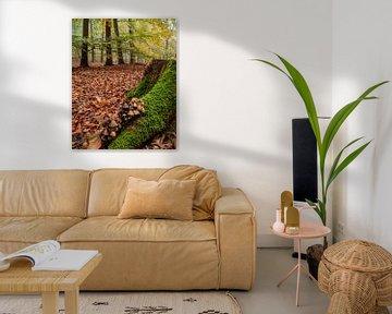 Herfst ten voeten uit van Arnoud van der Aart