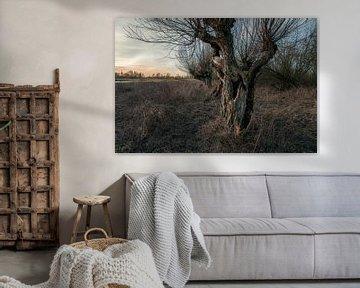 Alte Weide von Bert-Jan de Wagenaar