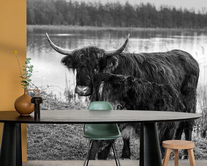 Sfeerimpressie behang: Kalf Schotse Hooglander drinkt bij zijn moeder van Heleen de Silva