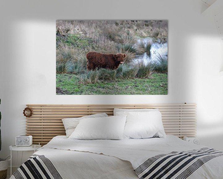 Sfeerimpressie: Schotse Hooglander in het moeras van Heleen de Silva
