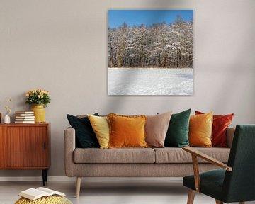 Schitteren sneeuwlandschap met besneeuwde bomen onder een stralend blauwe lucht van Kim Willems