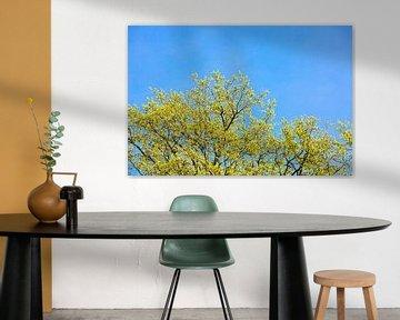 Trees in spring van Etienne Oldeman