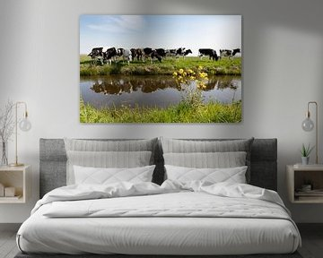 Nieuwsgierige koeien in de polder
