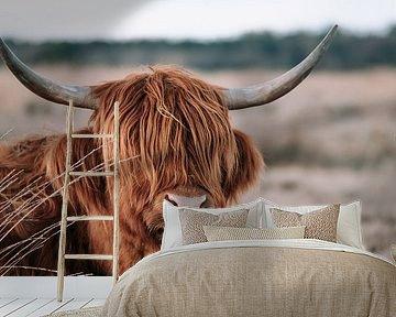Schotse Hooglander van Jantine Prins