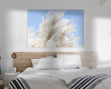 Ziergrasfedern winken in der Sonne von Tot Kijk Fotografie: natuur aan de muur